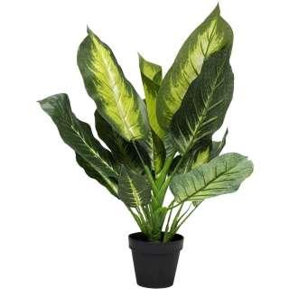Deko Pflanze Dieffenbachia 50cm