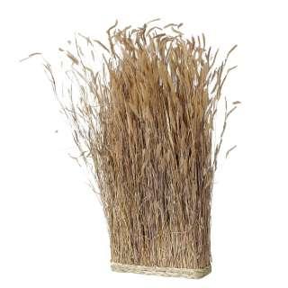 home24 Pflanze Saltus