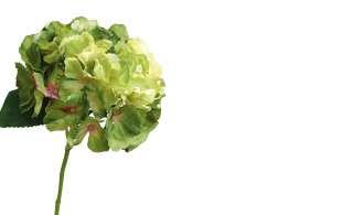 Hortensie ¦ grün ¦ Kunststoff Dekoration > Kunstblumen - Höffner